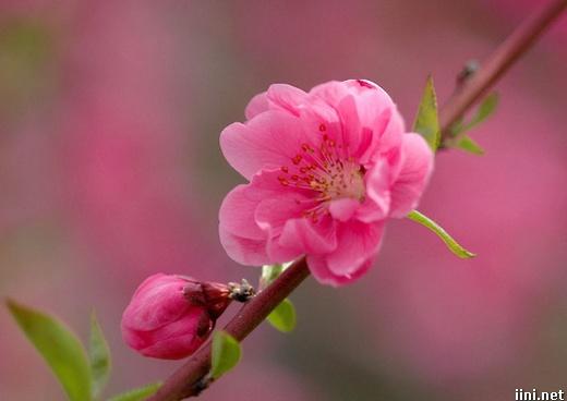 ảnh hoa mùa xuân đẹp tuyệt