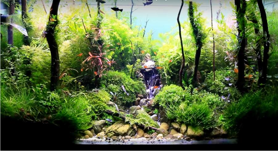 Hồ thủy sinh suối thác của Viktor Vin