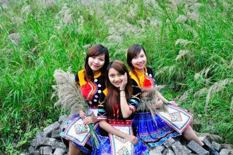 moc chau pys travel006 Cao nguyên Mộc Châu mùa lau trắng