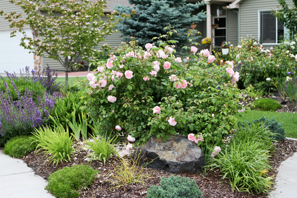 Vw Garden Companion Plants For Roses