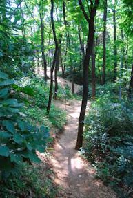 우장산 숲길