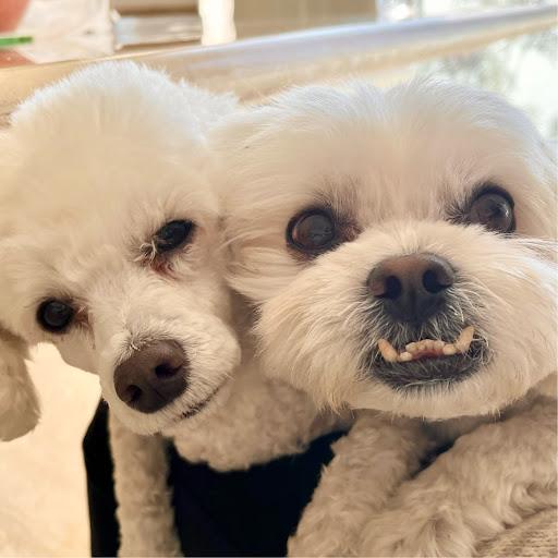 a E picture