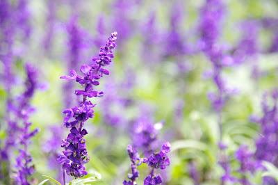 高貴な紫の香りが漂ってきそうな花に うっとり、心癒される
