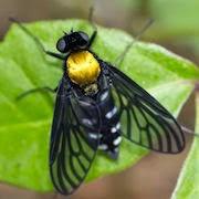 К чему снятся мухи?