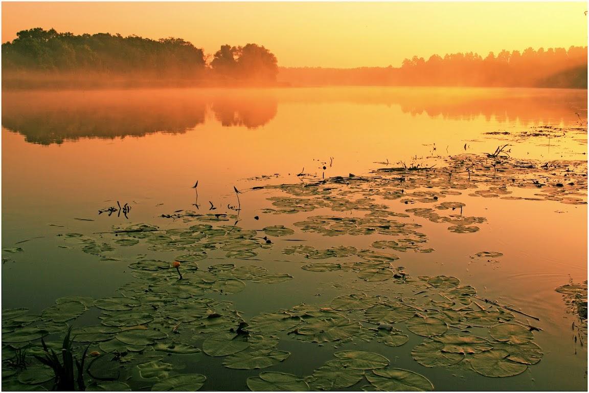 Утро, река Воронеж, тур база Росинка
