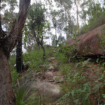Heading up the rocky bushtrack (122416)