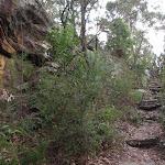 Steps below Lawsons Lookout (146376)