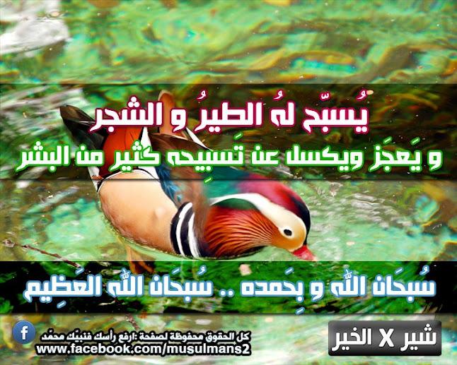 مجموعة تصاميم اسلامية من مختاراتى %D8%B3%D8%A8%D8%AD%D8%A7%D9%86+%D8%A7%D9%84%D9%84%D9%87
