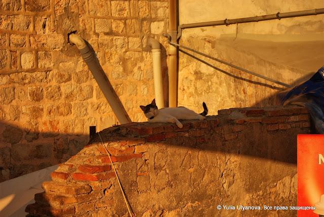 Под закатным солнцем на стенах Дубровника