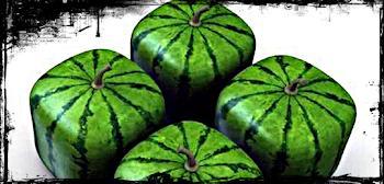 (Plugin) Applessed [Arboles Frutales] Watermeloncube