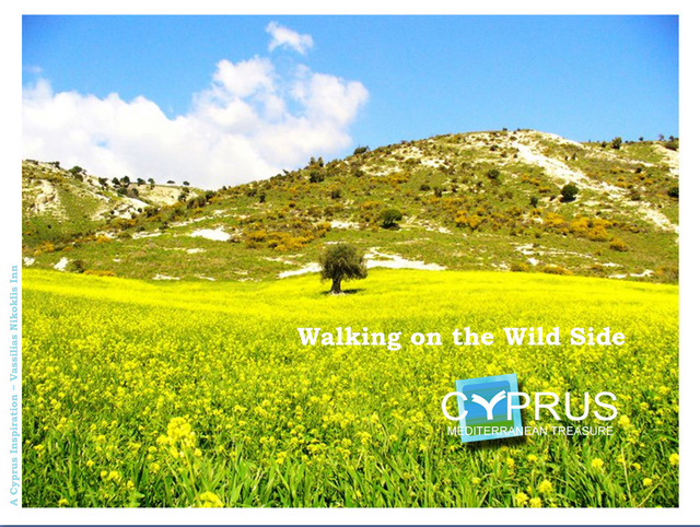 The wild side of Cyprus, yours to treasure