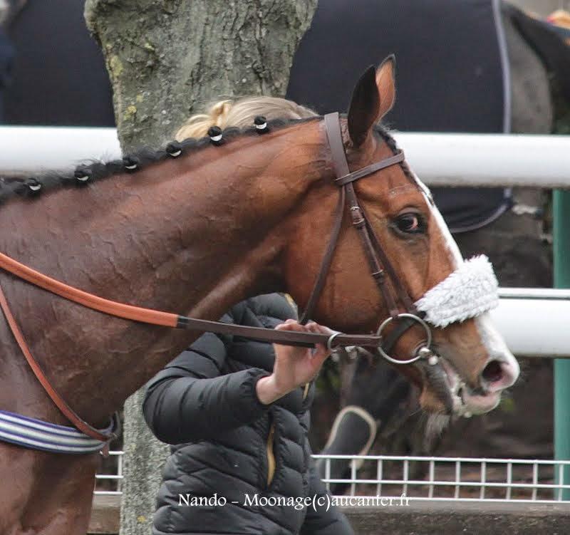Photos Auteuil 1-03-2015 IMG_7147