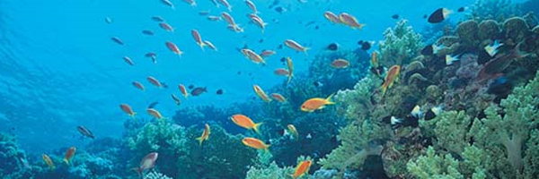 bioma marino