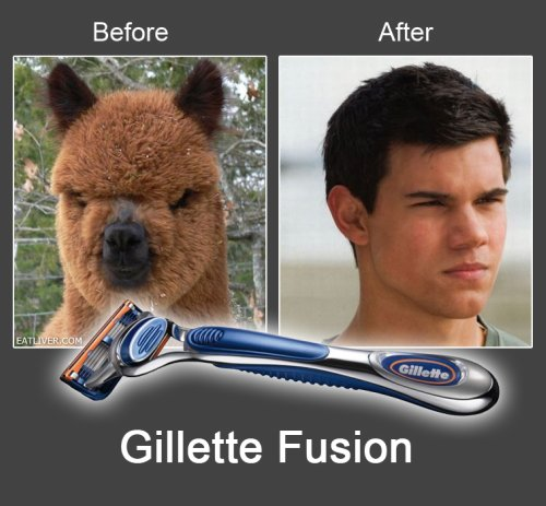 photo of a llama and then looking like Taylor Lautner after shaving