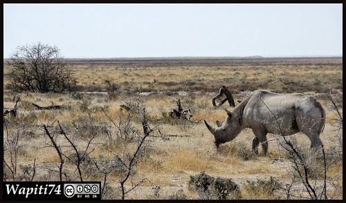 Balade australe... 11 jours en Namibie IMG_0395