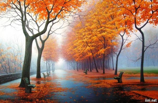 ảnh con đường vắng sau cơn mưa mùa thu