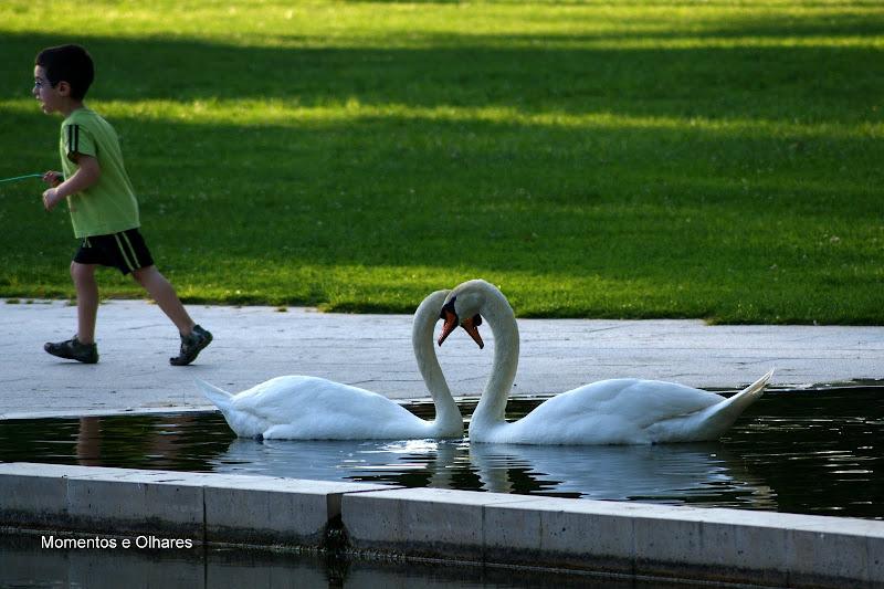 Cisnes, Jardim do Bonfim, Setúbal, Portugal