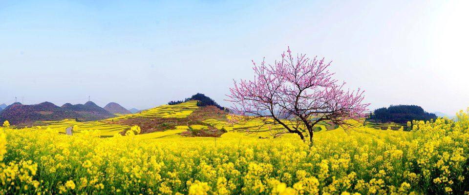 thơ lục bát mùa xuân