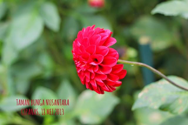 Taman Bunga Nusantara Puncak Cipanas