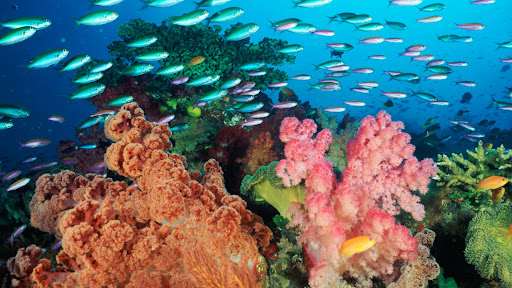 Coral Landscape With Soft Corals and Fish, Fiji.jpg