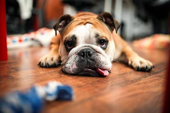 Chó và những câu chuyện để suy ngẫm-2