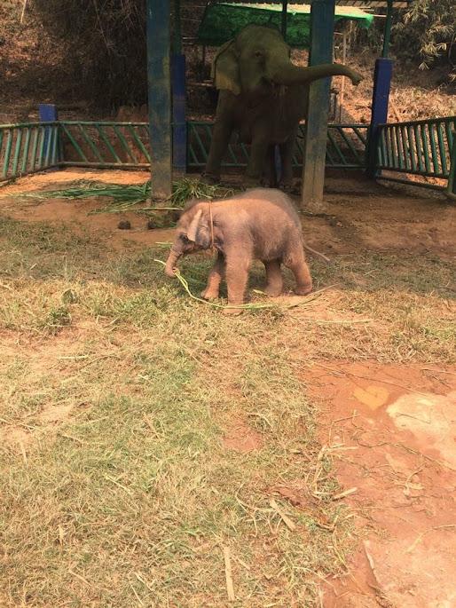 Anantara Golden Triangle Elefant Resort
