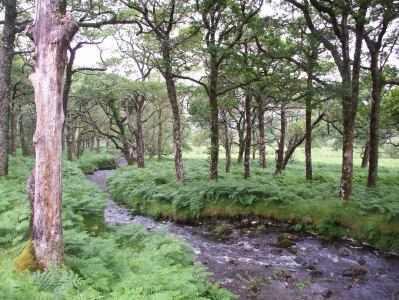 Fluss und Wald in Connemara, Irland