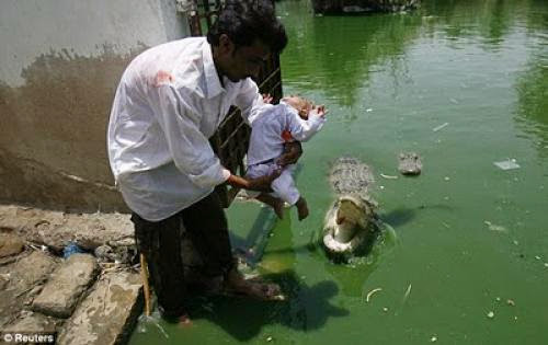 Religion Belief Sheedi Meldevotees Make Offerings To Crocodiles