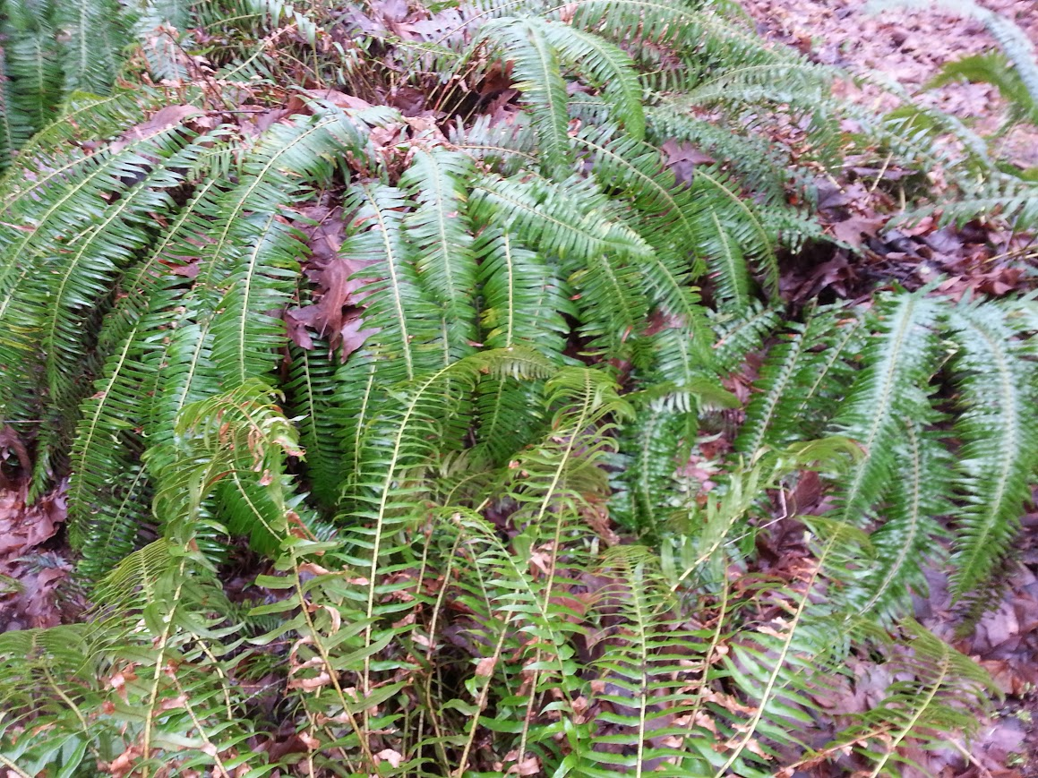 Some loaded fern branches and top sign.