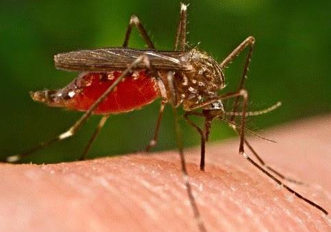 როგორ დავიცვათ თავი კოღოებისგან?