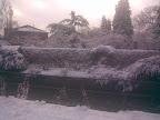 Very snowy hedge & river bank scene