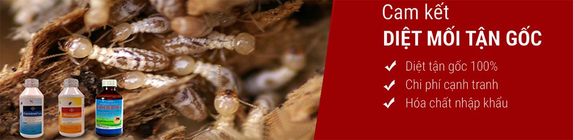 Diệt mối, Diệt mối tận gốc, Phòng chống mối, Diệt côn trùng