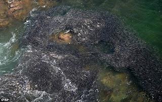 Kesan Tsunami  & Gempa Bumi Jepun