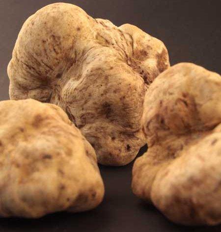 Italian Truffles (Tartufi)