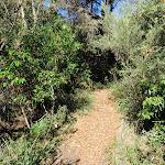 Norah Head nature trail (194444)