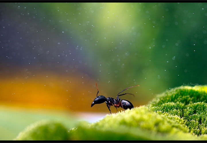 NadavBagim14 Disney Inspired Magical Photos Of Insects