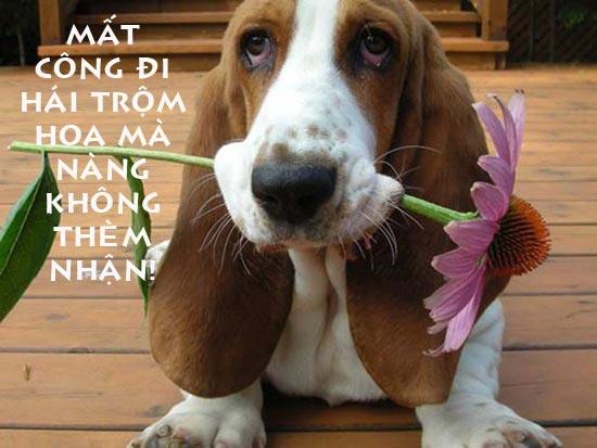 Ảnh chú cún hái trộm hoa