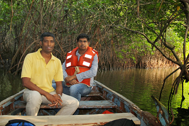 Pichavaram (Mangroove forests)