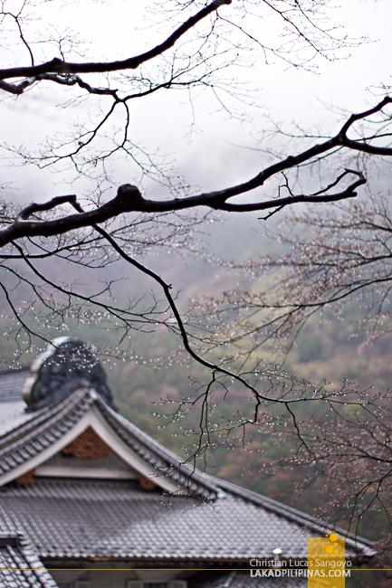 Dew Drops at Hakone's Fujiya Hotel