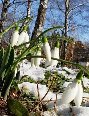 Весна.Выставка ульев на пасеку