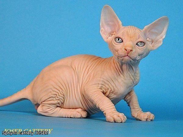 1 er Thème : Quand votre/vos chats étaient chatons Enigma%2520petite