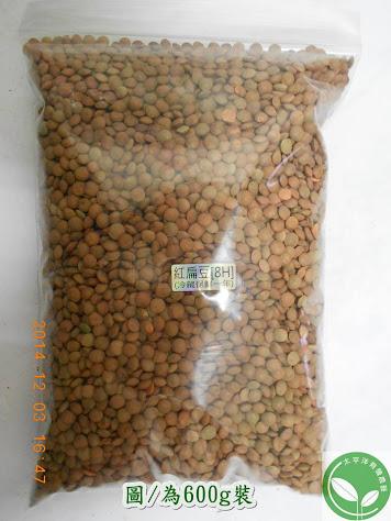 紅扁豆 紅扁豆種子
