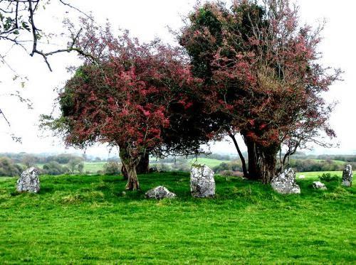 The Magickal Rowan Tree