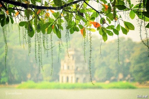 thơ cây lộc vừng bên hồ Gươm