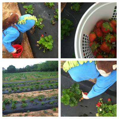 nature study, berry picking, Montessori homeschool