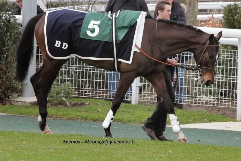 Photos Auteuil 1-03-2015 IMG_7106