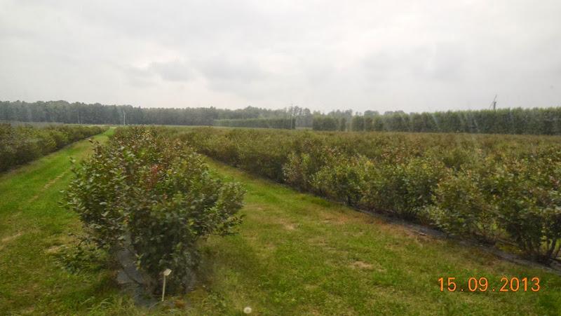 поле лохини