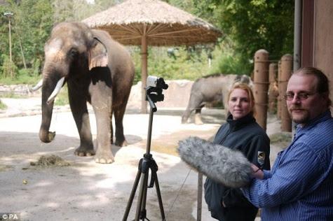 Khosik, Gajah Unik Bisa Ngomong Seperi Manusia
