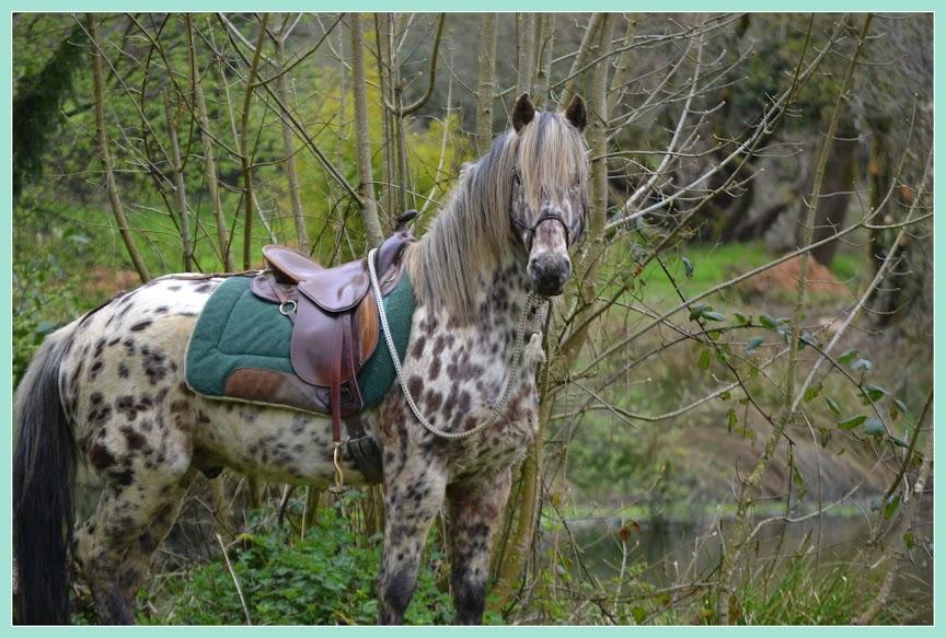 un cheval que j 'ai trouvé   trés beau  dans les animaux amis