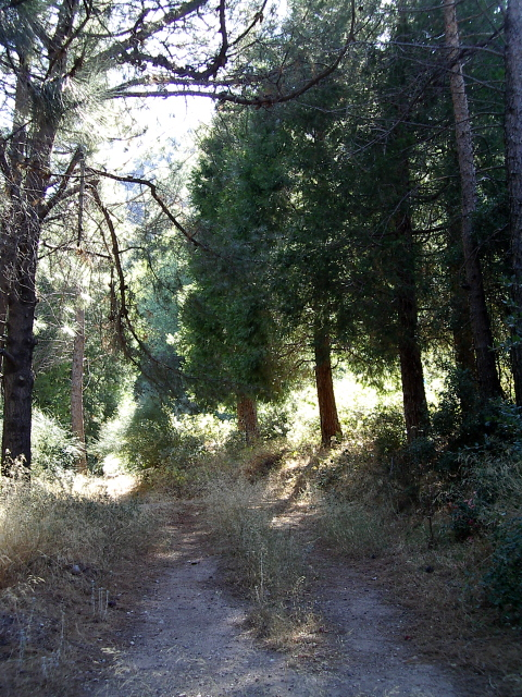 overgrown fire road lined with odd trees for the area